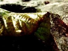 mokry jesienny liść